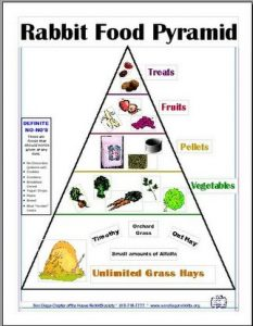 Rabbit Diet Pyramid Photo