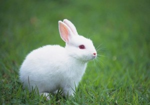 Images of Rabbit