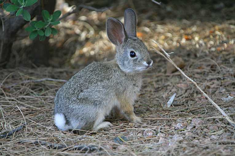 how to call a wild rabbit
