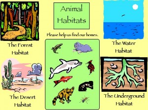 Animal Habitats Picture
