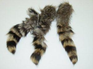 Raccoon Tail Photo