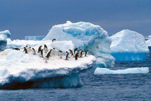 Adelie Penguin Habitat