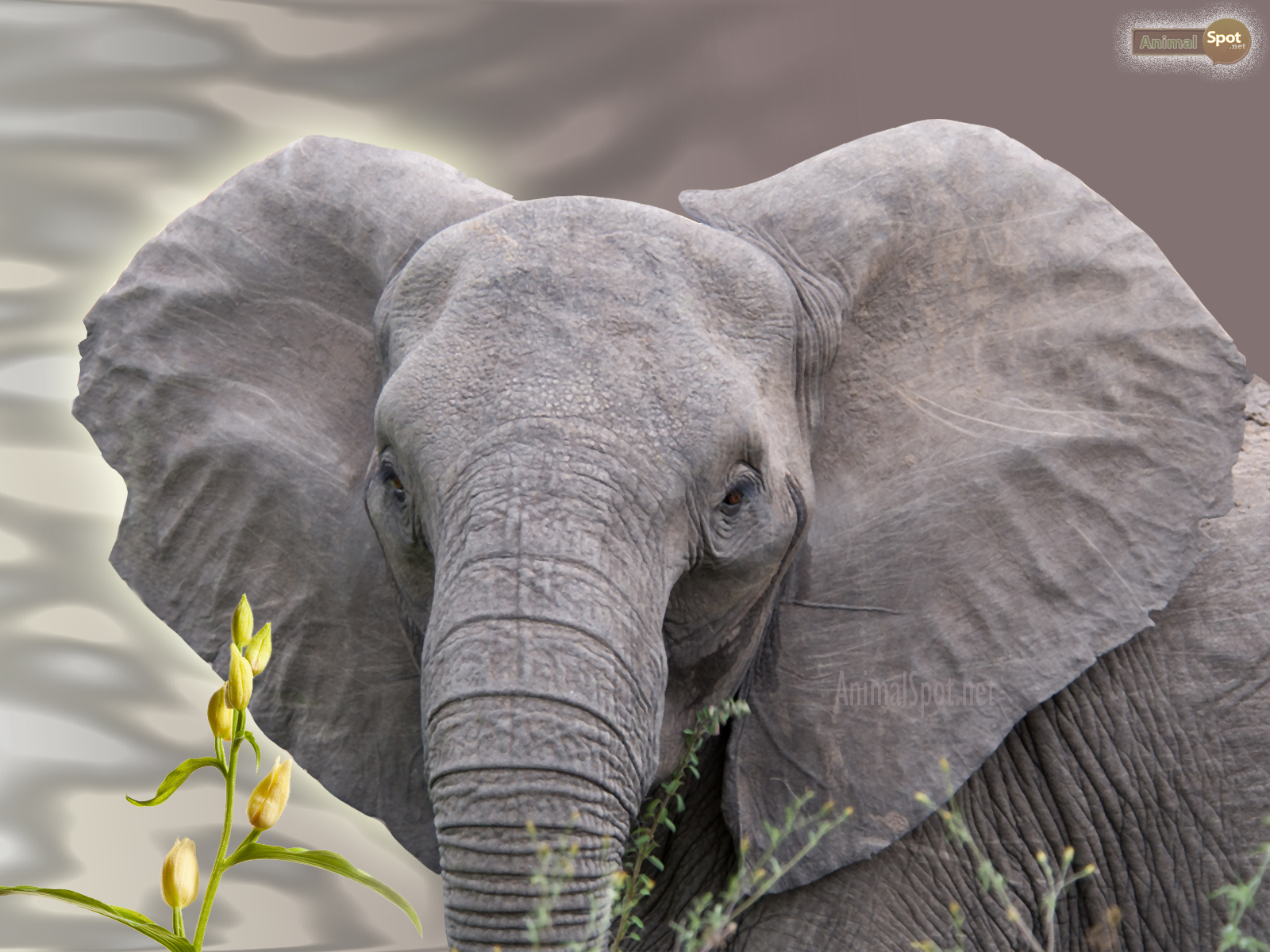elephant wallpapers animal spot