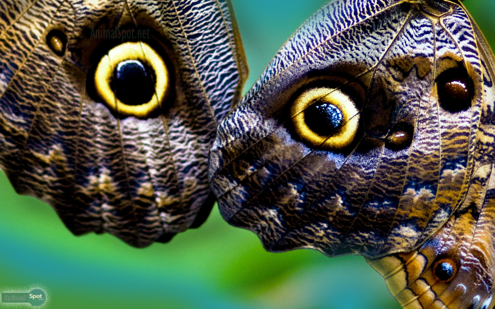 Butterfly Wallpapers Animal Spot