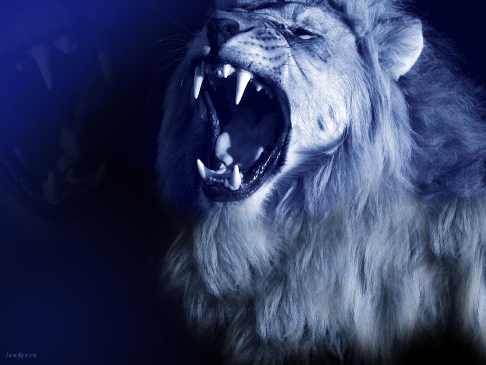 pics photos lion roar wallpaper