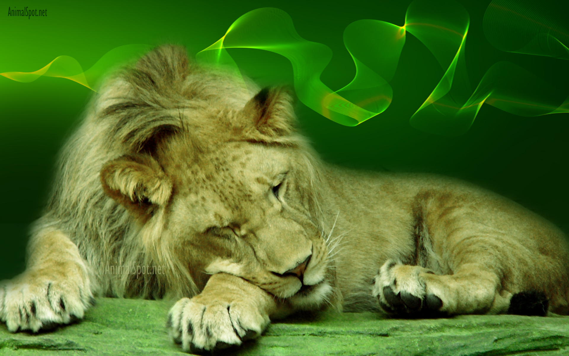 Lion Wallpapers Animal Spot