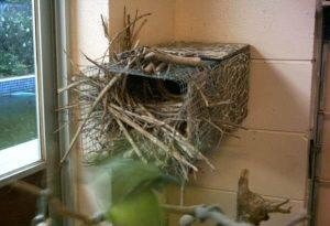 Nest Box of Quaker Parrot