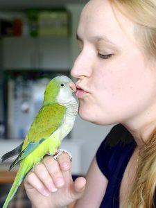 Quaker Parrot as Pets
