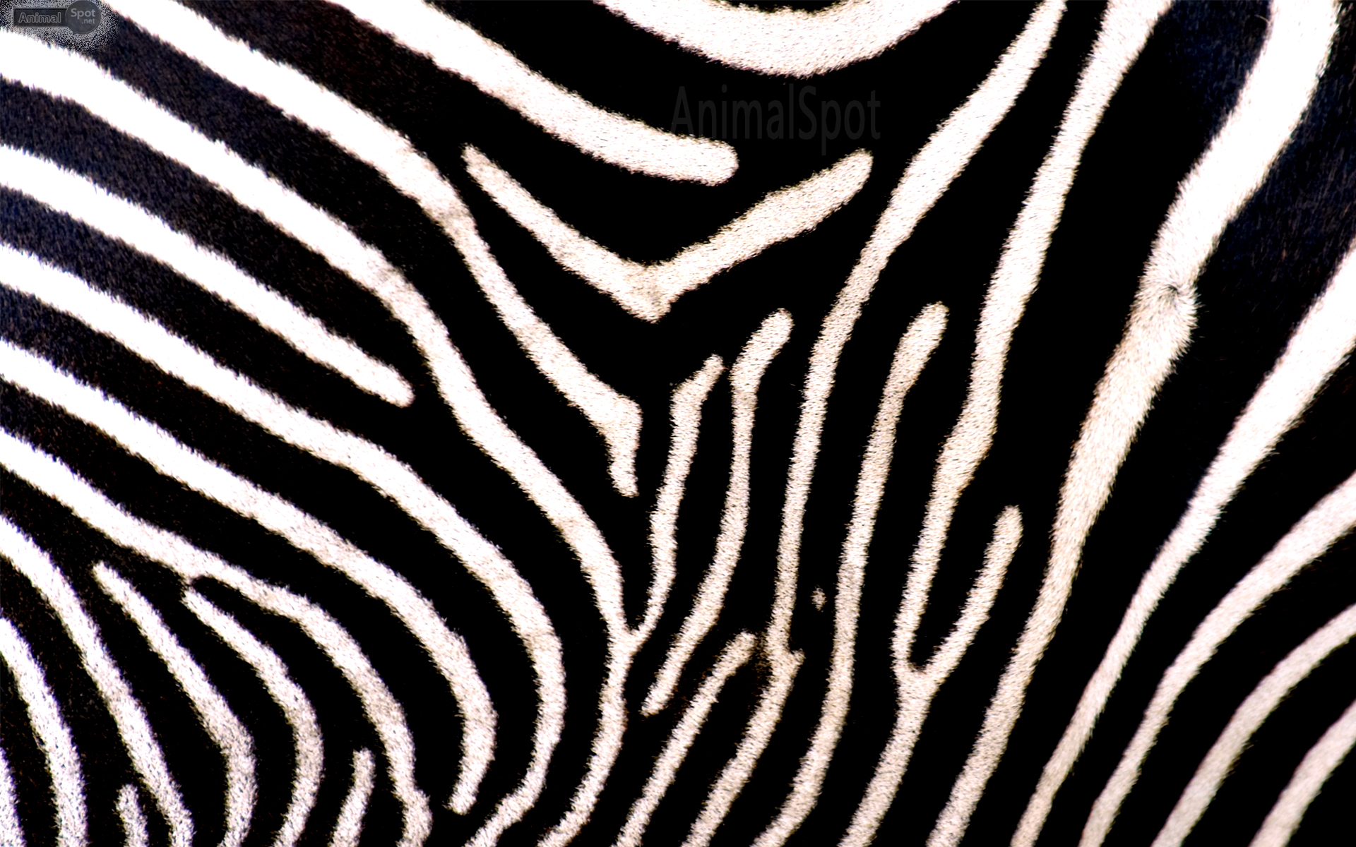 Zebra print background for computer for Printed wallpaper