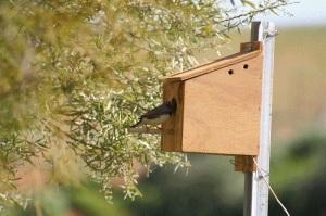 Zebra Finch Nest Box