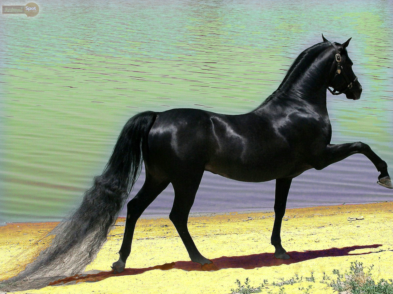 Horse wallpapers animal spot - Arabian horse pictures ...