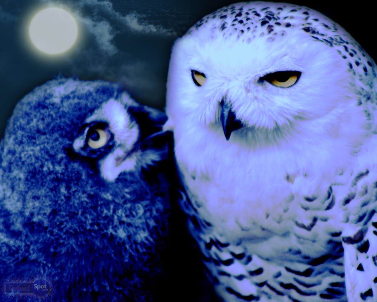 owl wallpapers animal spot