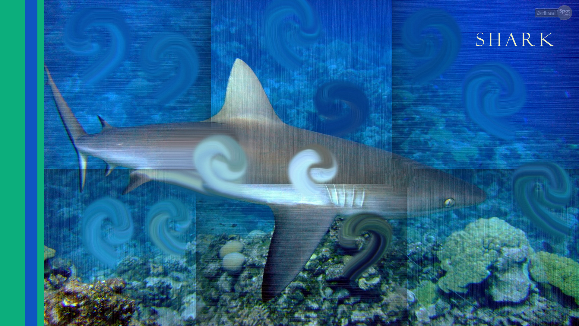 live shark wallpaper - photo #17