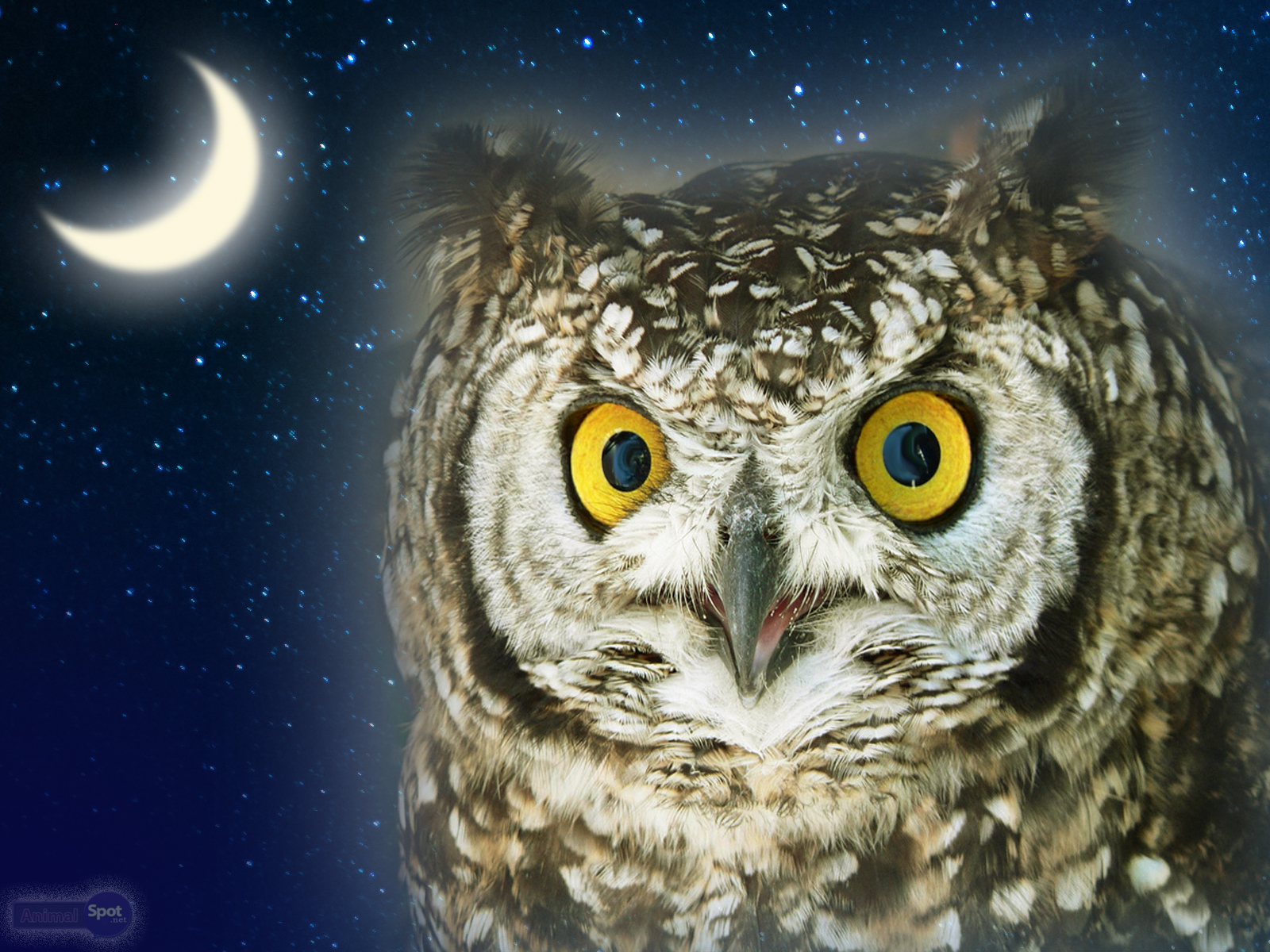 best owl wallpapers and backgrounds