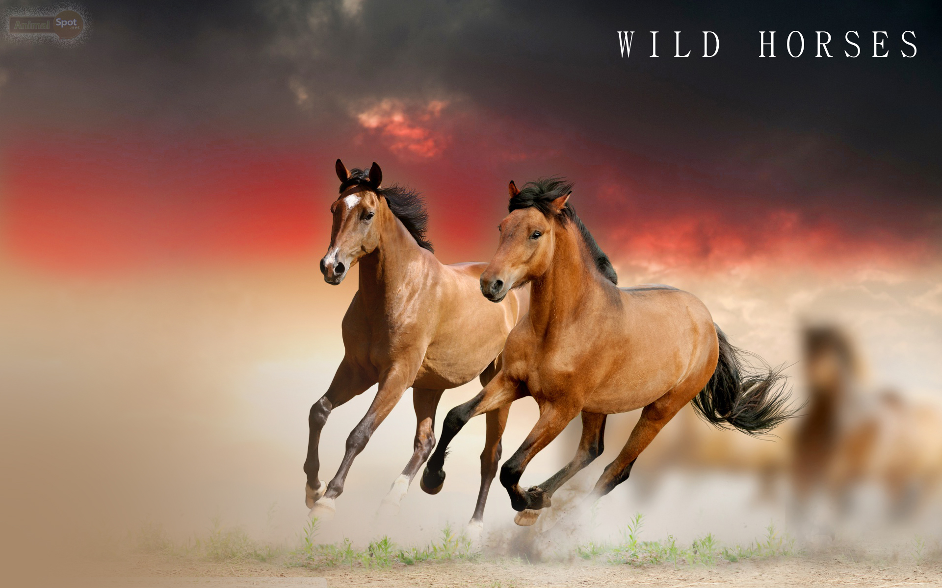 Horse Wallpapers Animal Spot