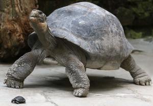 Galapagos Tortoise Photos