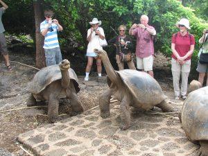 Galapagos Tortoise Size