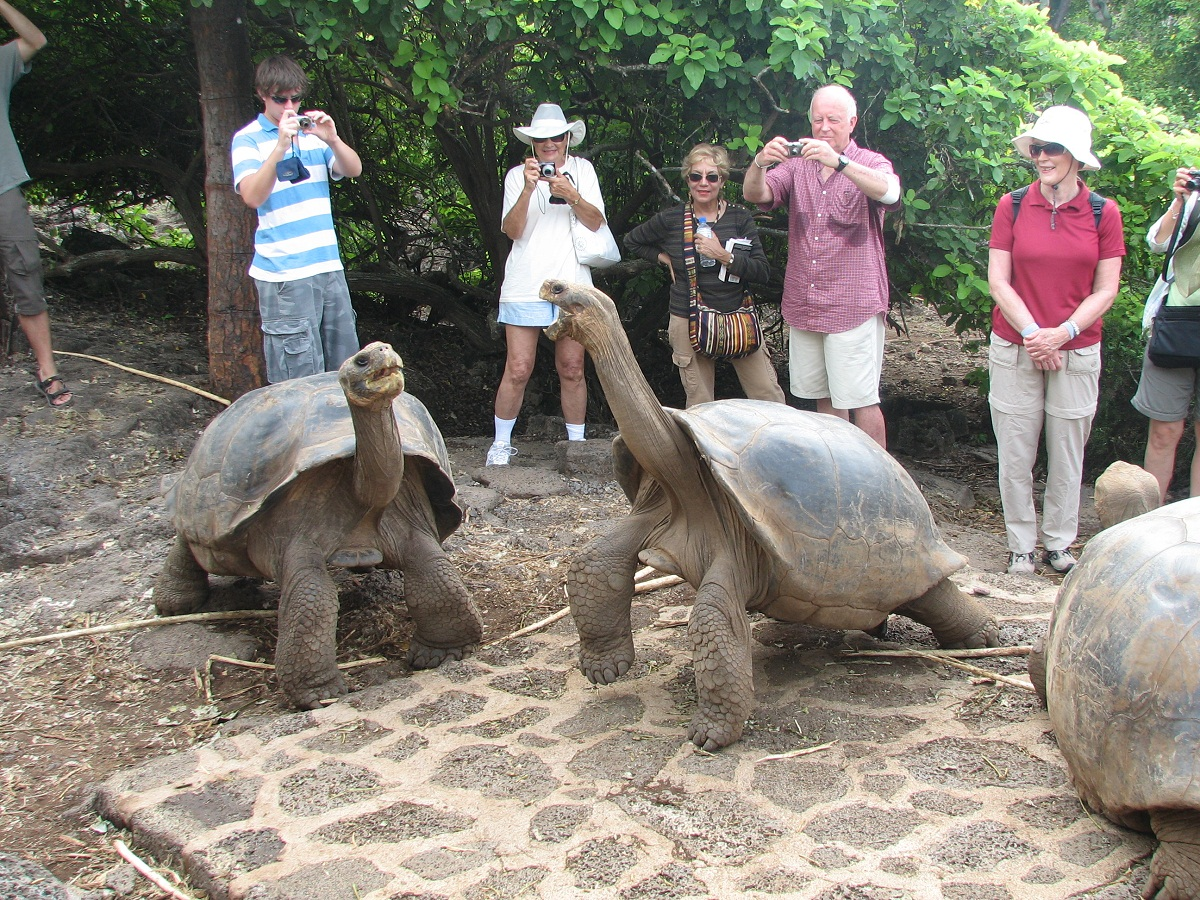 longevity of galapagos islands giant tortoises essay Free essay: the galapagos islands the galapagos islands are a  giant tortoises whose size are incomparable to any european tortoise and specimen of finches.