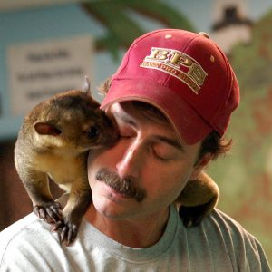 Kinkajou as Pet