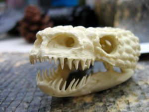 Gila Monster Teeth