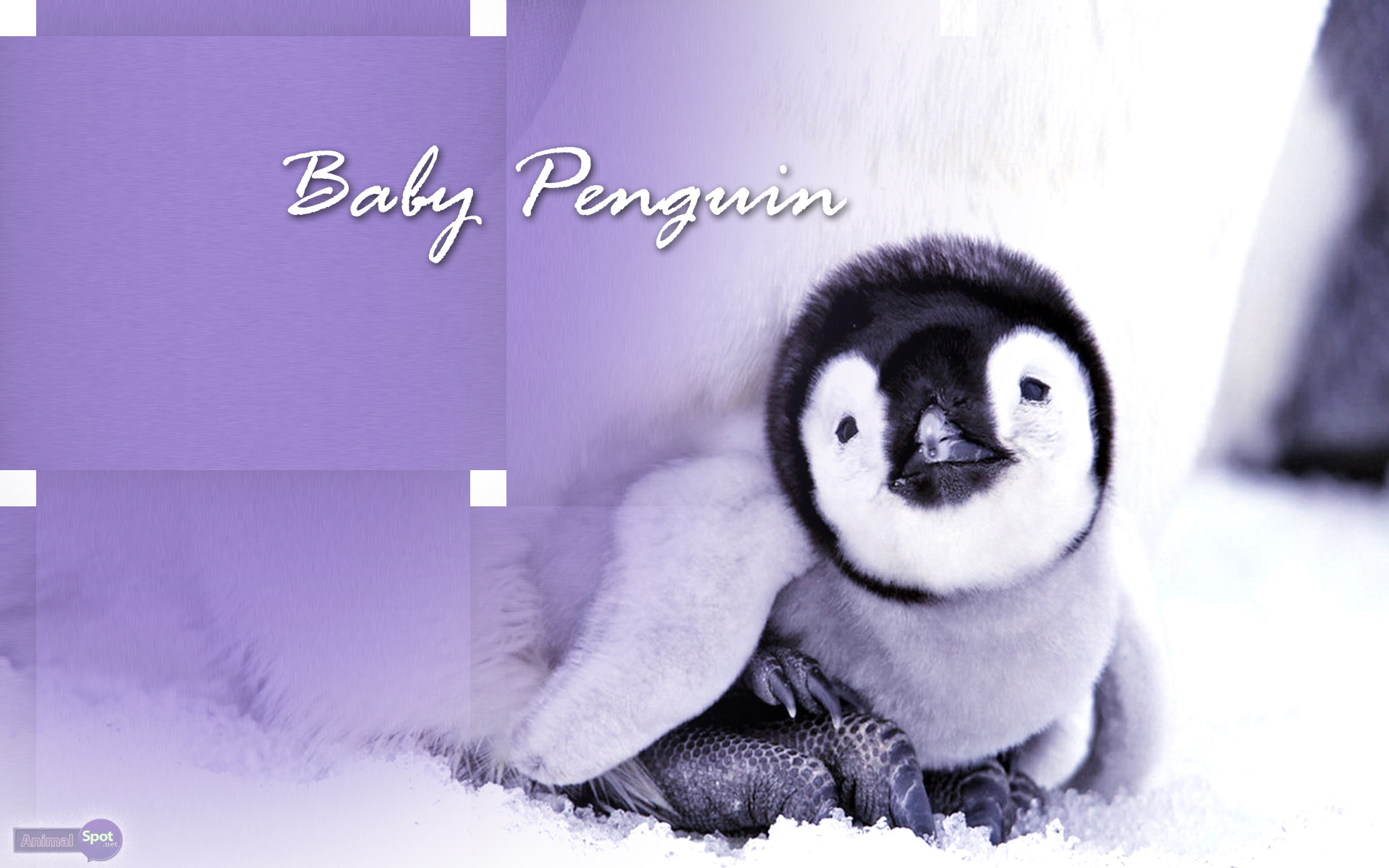 Best Penguin Wallpapers And Backgrounds Baby Wallpaper