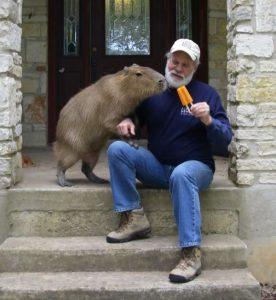 Capybara Size