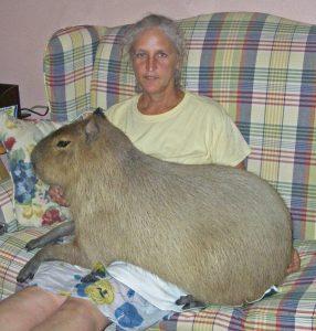 Capybara as Pets