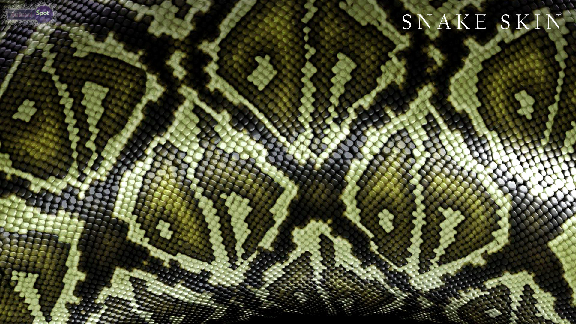 snake wallpapers – animal spot