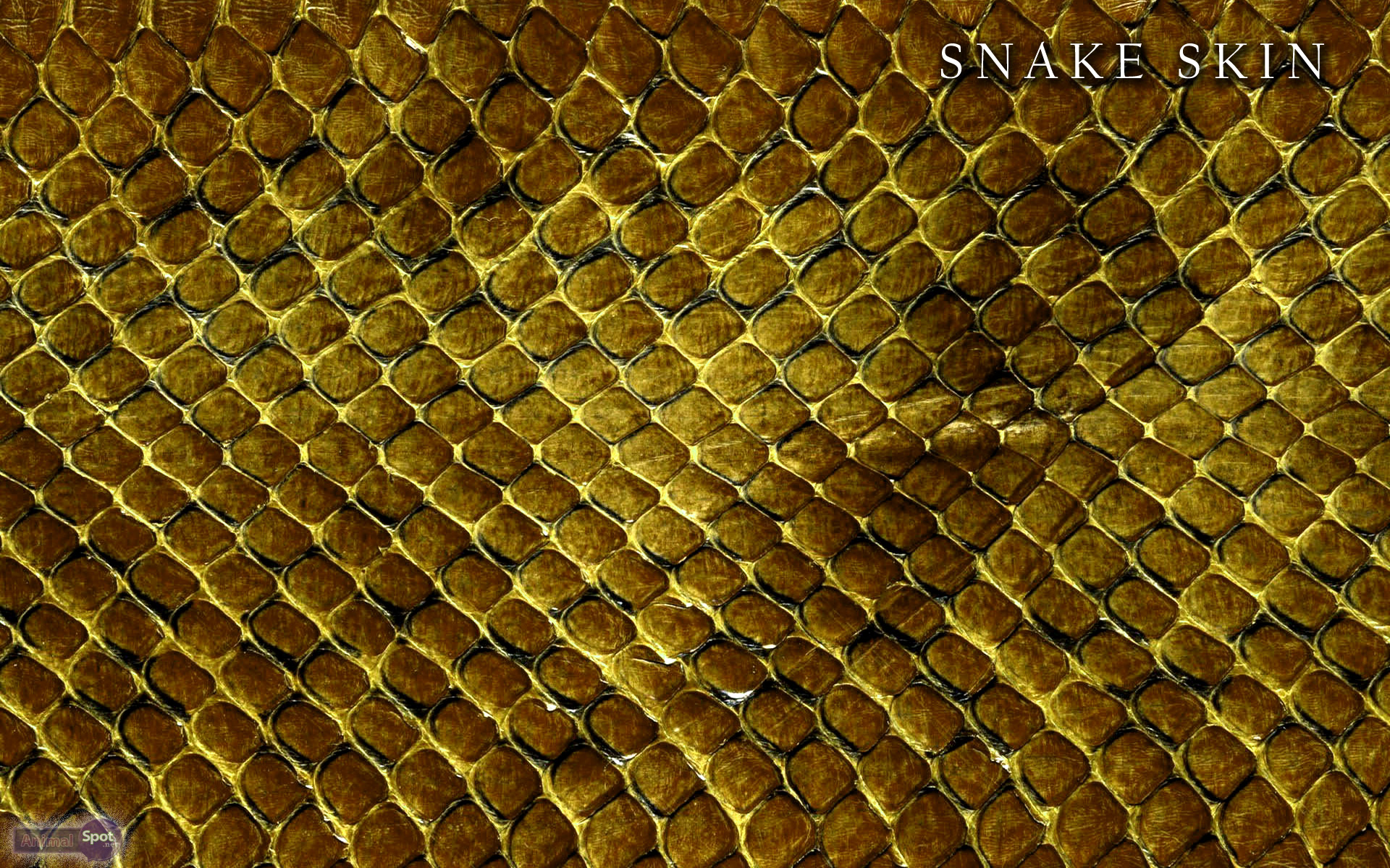 Best Snake Wallpapers And Backgrounds