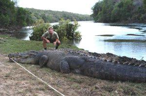 Saltwater Crocodile Size