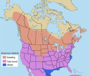 American Kestrel Range Map