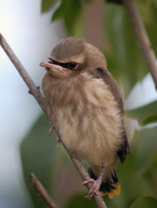 What Do Baby Wild Birds Eat And Drink