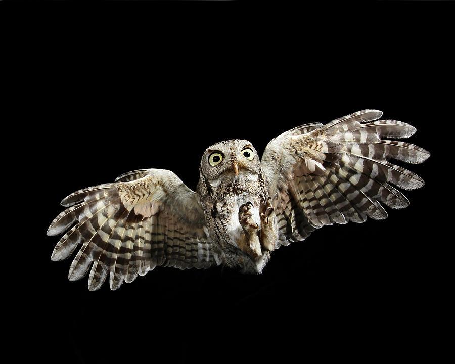 How Do Snowy Owls Eat Their Food