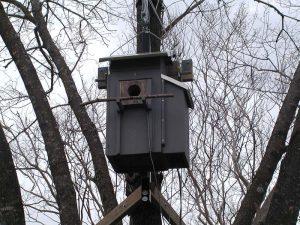 Eastern Screech Owl Nest Box