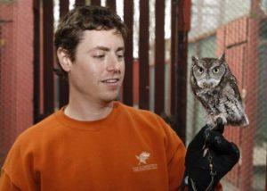 Eastern Screech Owl as Pets