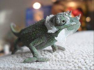 Jackson Chameleon Baby