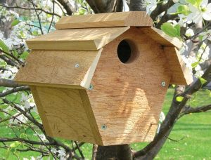 Carolina Wren House