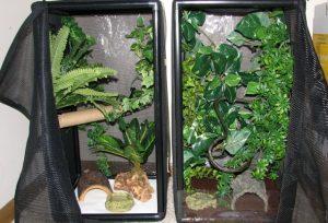 Gargoyle Gecko Terrarium