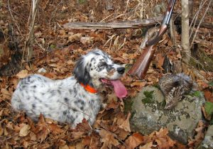 Ruffed Grouse Hunting