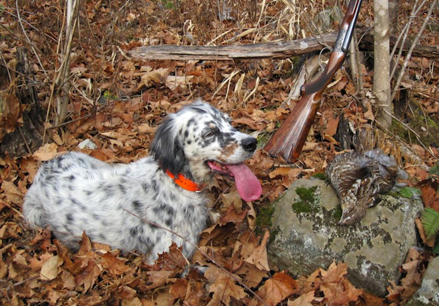 Ruffed Grouse Facts, Habitat, Diet, Life Cycle, Baby, Pictures