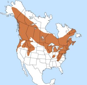 Ruffed Grouse Range