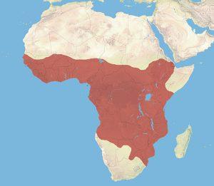African Civet Range