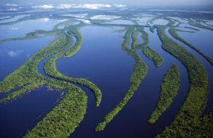 Amazon River Dolphin Habitat