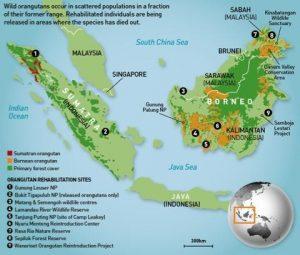 Bornean Orangutan Map