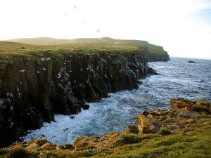 Atlantic Puffin Habitat
