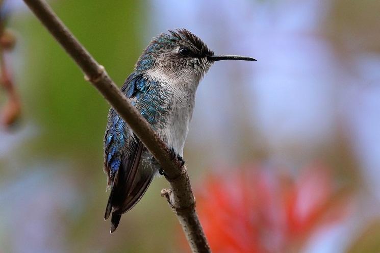 Hummingbird Nutrient Requirements