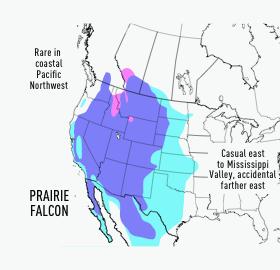 Prairie Falcon Range
