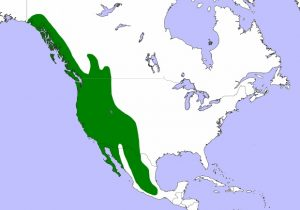 Western Screech Owl Range