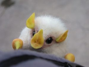 Honduran White Bat Pictures