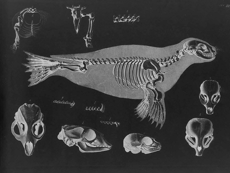 harbor seal facts habitat behavior predators pictures rh animalspot net